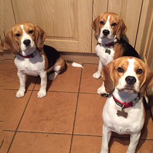 3 dogs in the kitchen